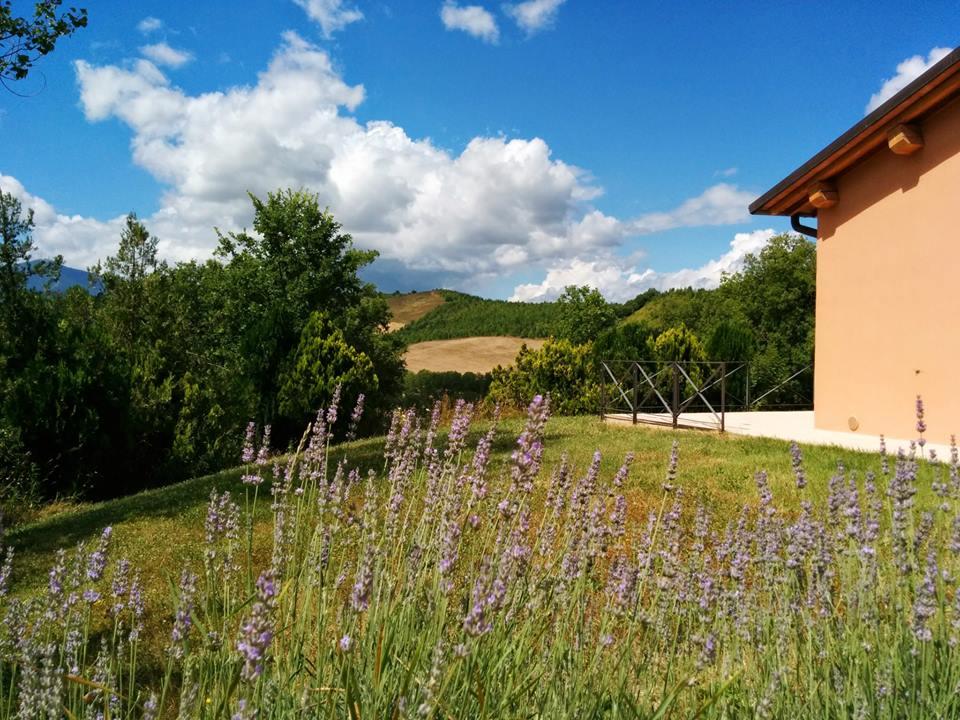 Valle Nuova Agriturismo lavender