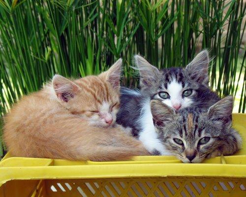 3-gattini-cassa-gialla