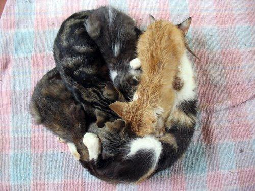 4-gattini.0