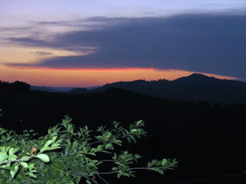 tramonto-piante-primo-piano
