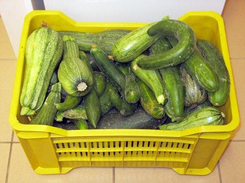 zucchine-cetrioli