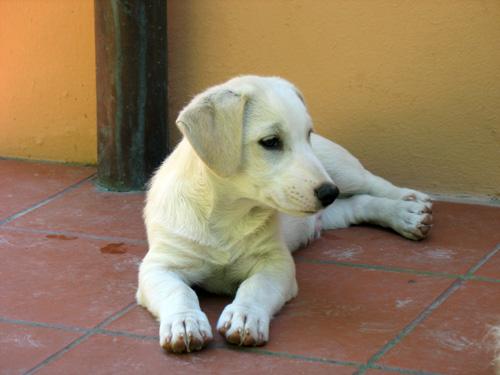 Canetto-bianco-settembre