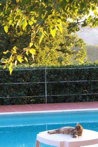 gatta-in-piscina
