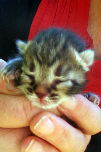 micro-gattino-5-settembre