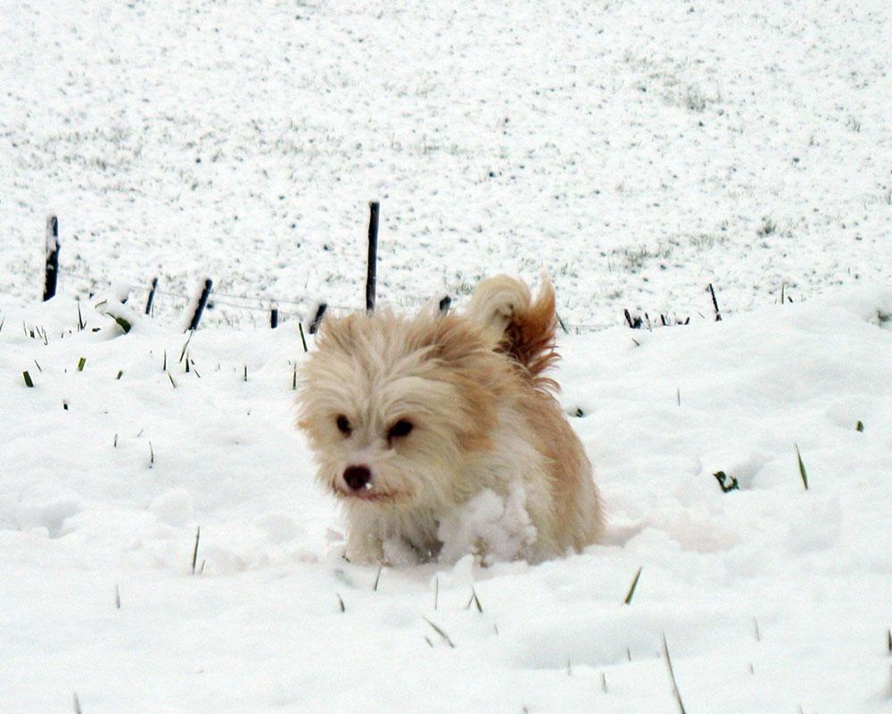 Neve-Chicca