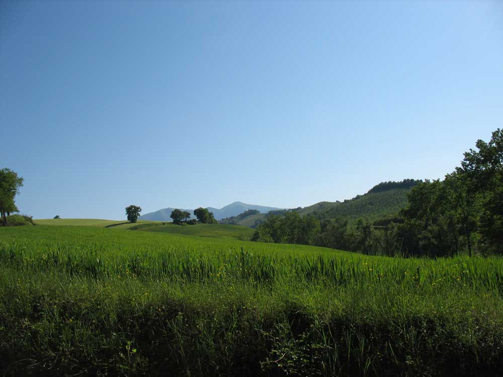 Le Marche countryside 2