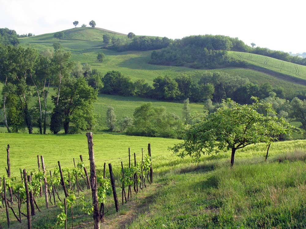 Urbino countryside 2
