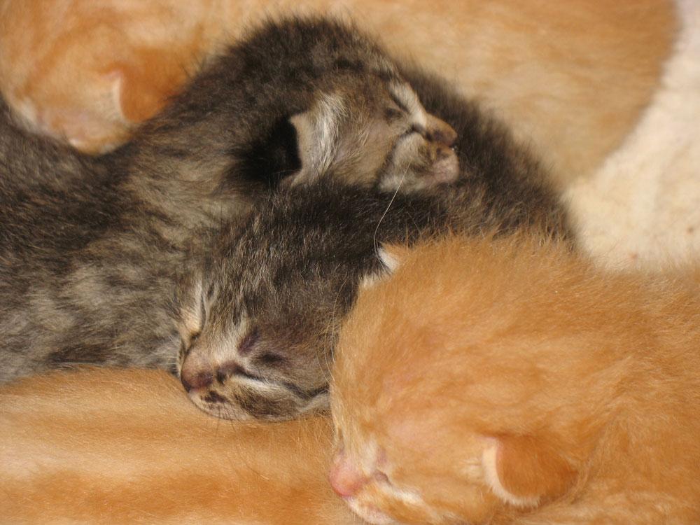 gattini-casa