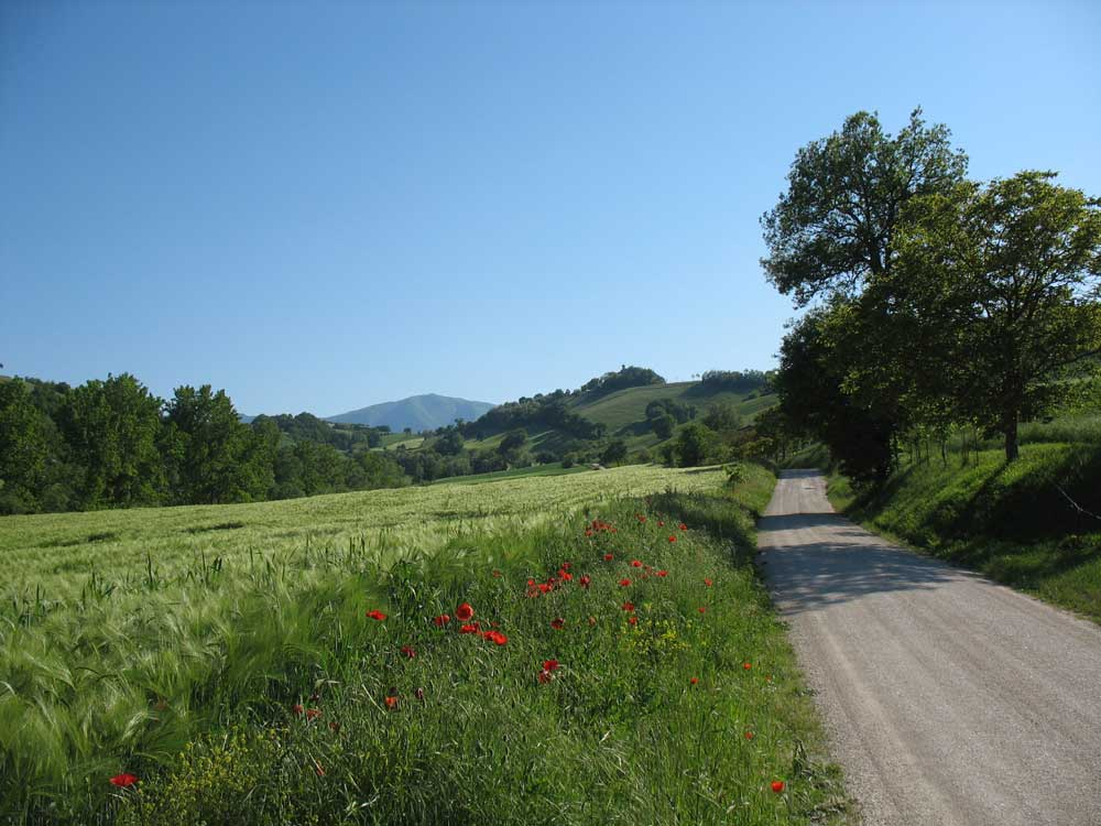 Le Marche in May