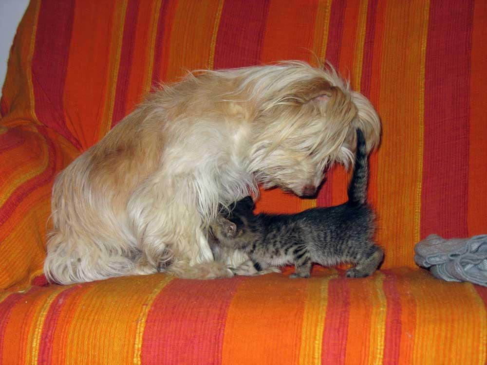 Chicca-gattino-1