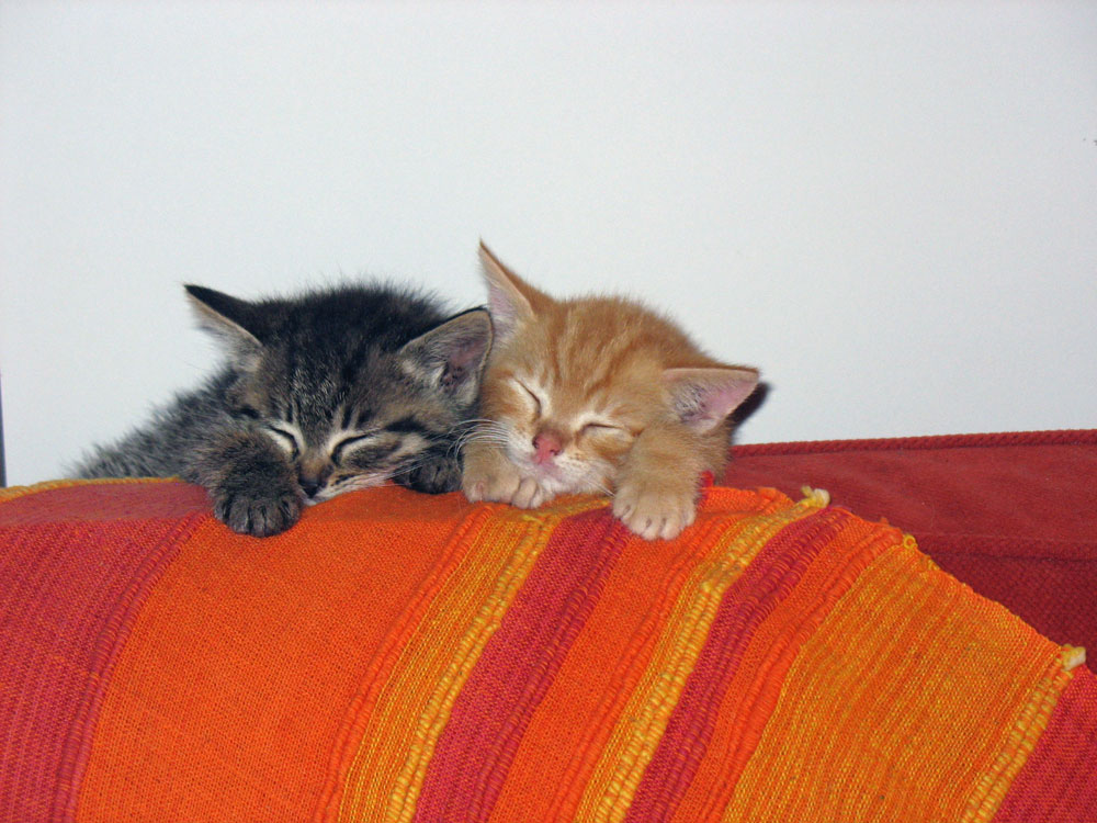 Gattini-divano