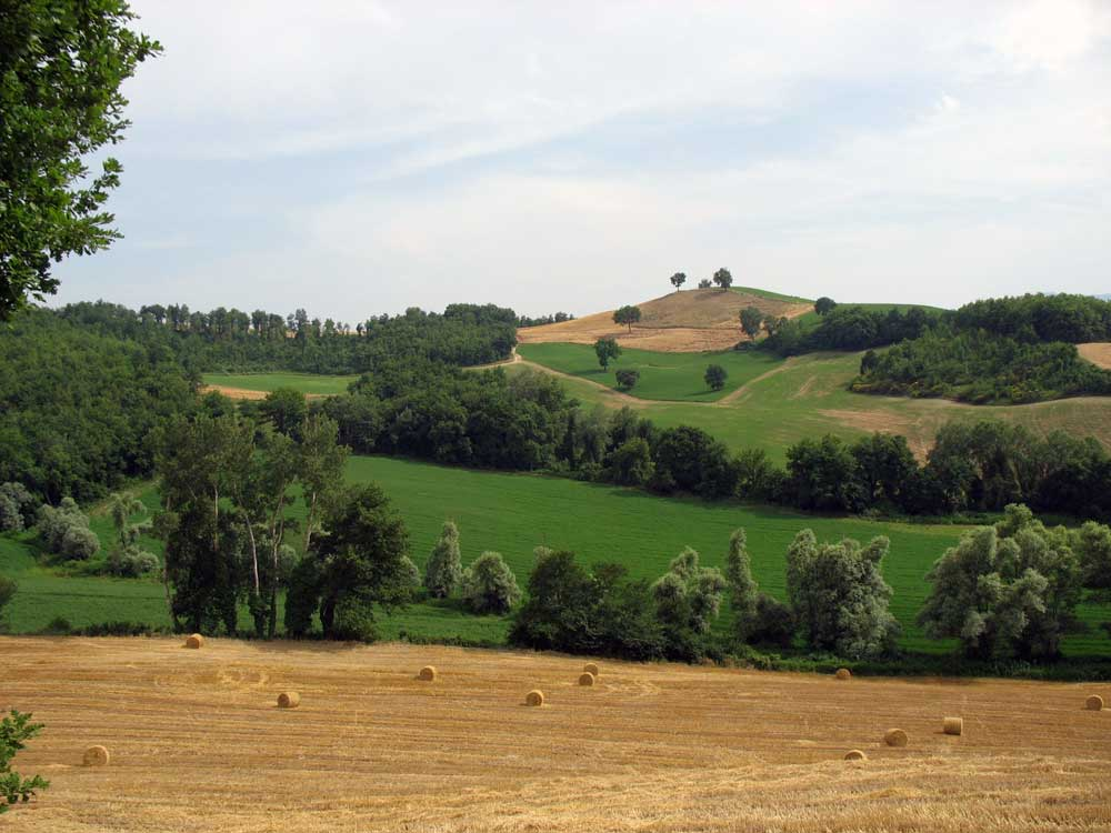 June in Le Marche countryside