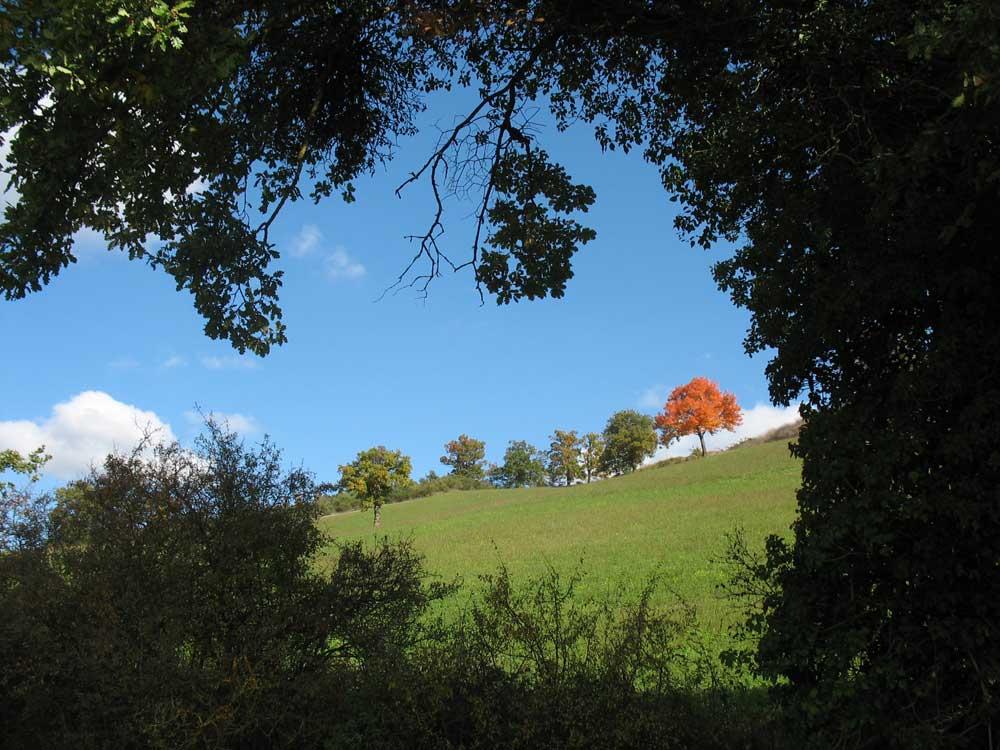 Autumn sorbus domestica