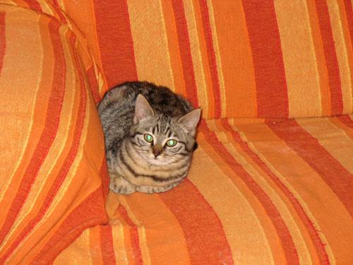 gattina-poi