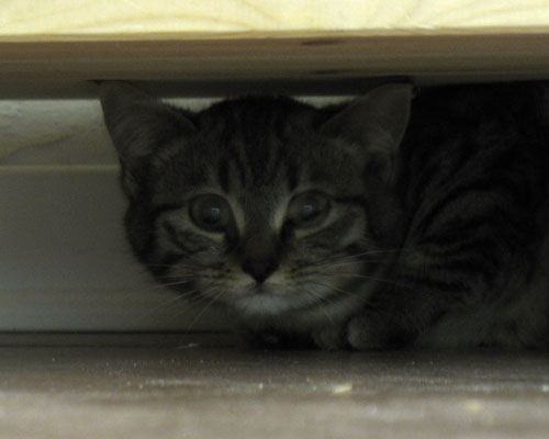 gattina-prima