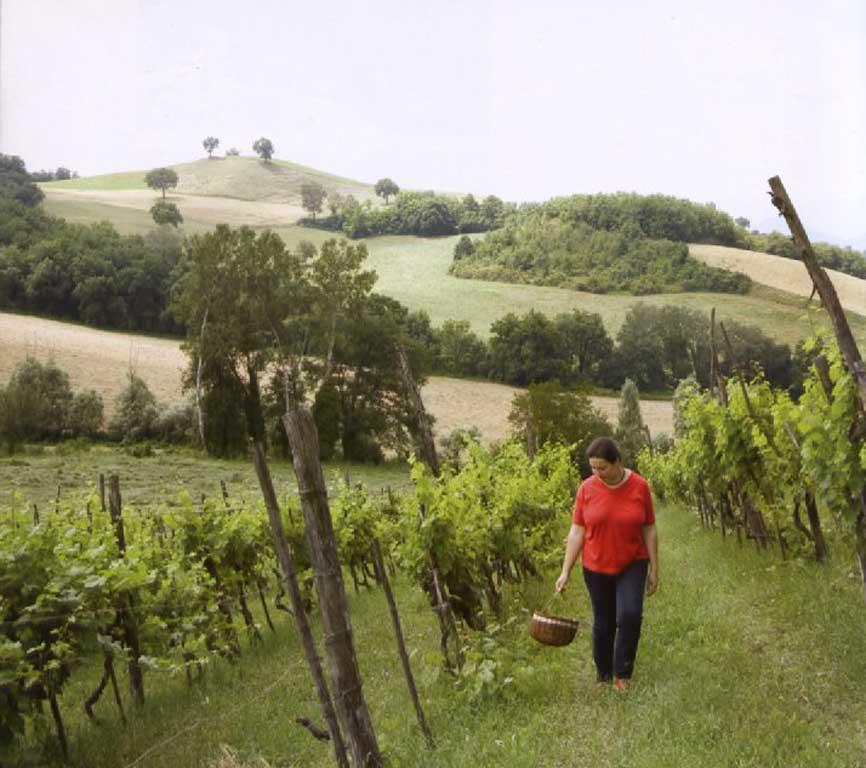 Go-Slow-Italy-Giulia-vine