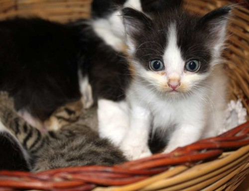 Photo of the day: kittens!