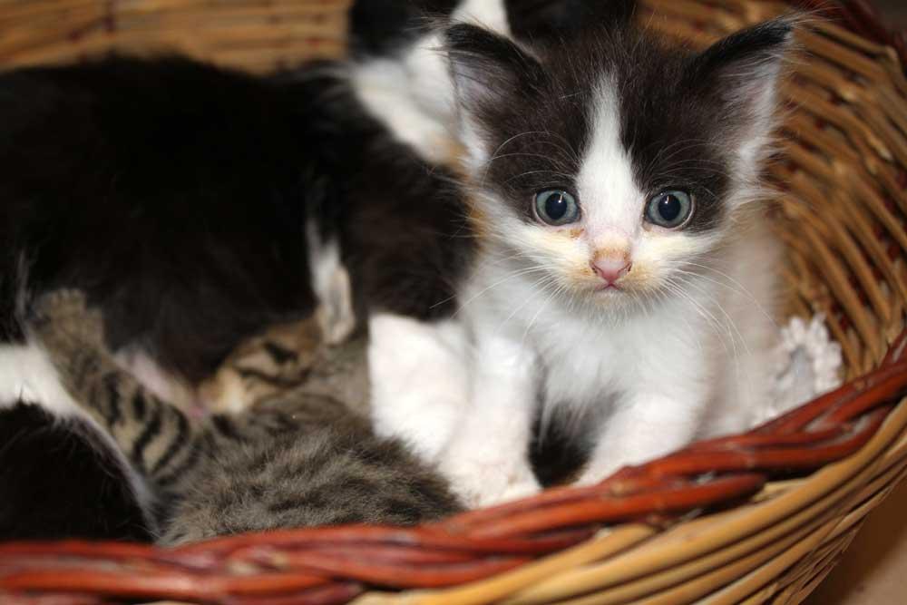 Kittens-2010