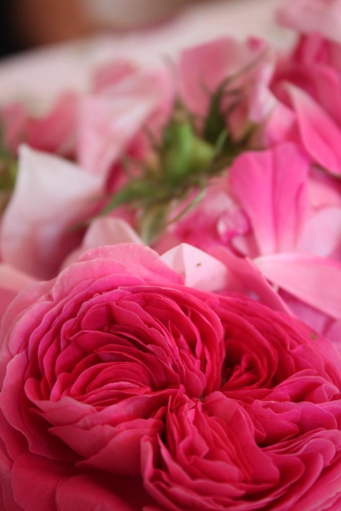 Roses jam