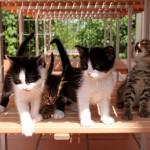 2011 kittens