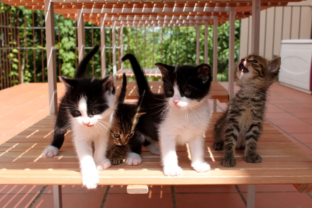 2011 kittens grow