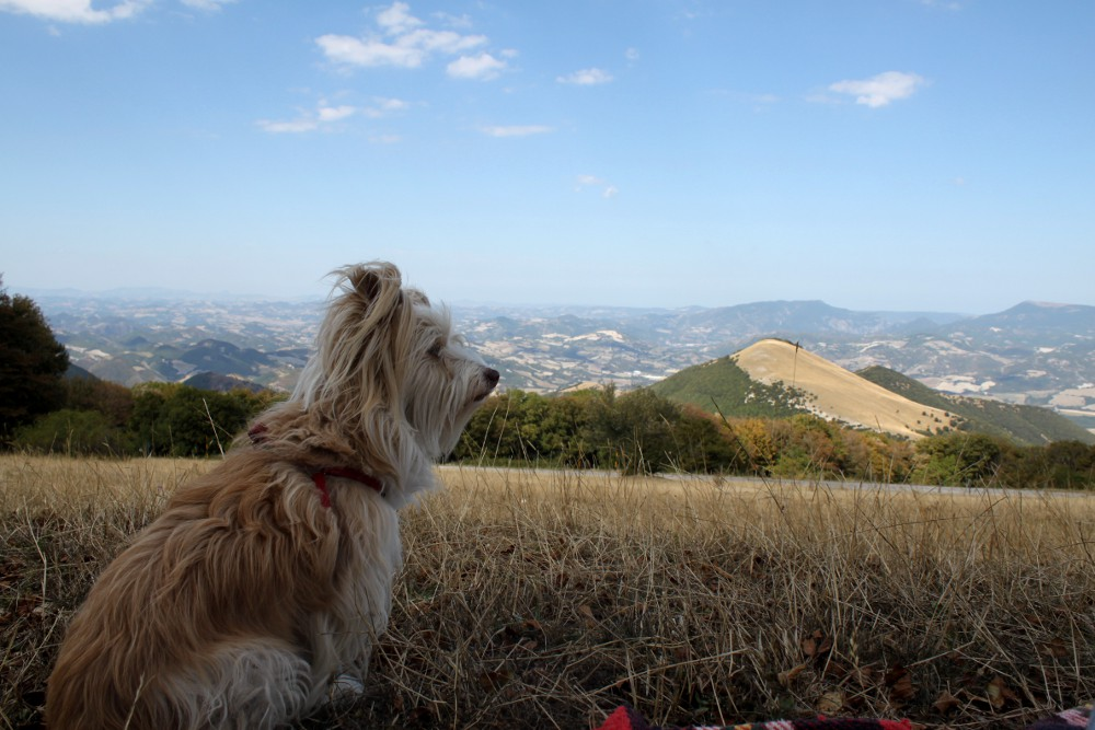 Chicca Monte Catria