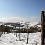 Photo of the day: winter in Le Marche