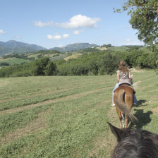 Le Marche Things to do