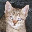 vallenuova cat
