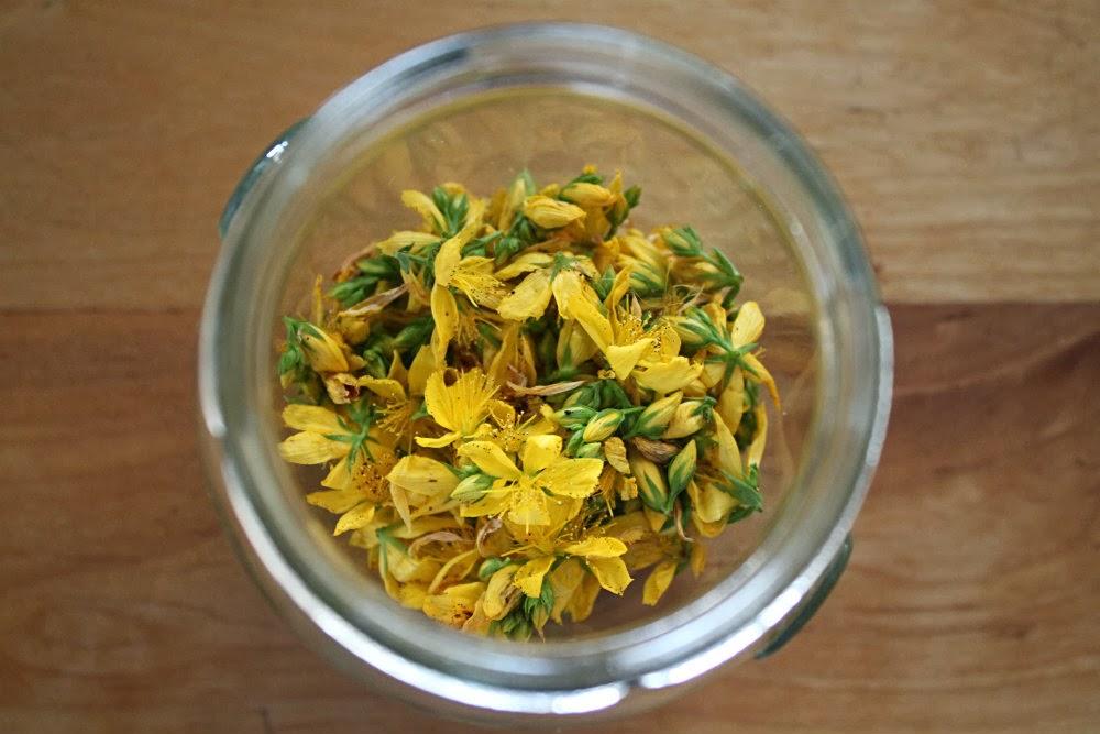 Saint-John-s-wort-jar-foraging