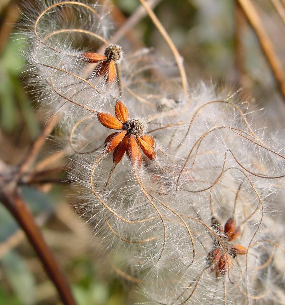 vitalbe-autunno