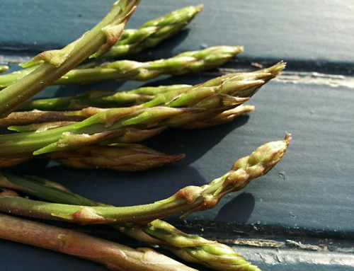 FORAGING: wild asparagus