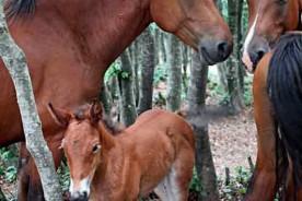 Catria horses Apennines Marche Italy