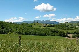 Green landscape Valle Nuova Organic farm Agriturismo Marche Italy