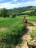 Horse riding holidays Marche Hills Urbino Valle Nuova Agriturismo