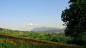 Monte Catria Marche hills landscape nature poppies