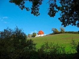 Nature Autumn Marche outdoor Countryside Urbino Italy