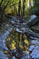Wood trekking Marche Italy Nature