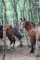 horses monte catria Marche outdoor activities Umbria border Italy