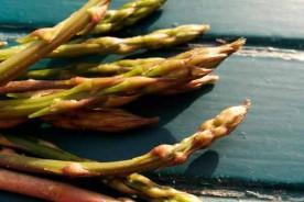Wild asparagus forage wild food Italy Marche Urbino