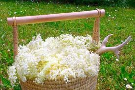 Elderflower cordial liqueur cake foraging flowers Marche Urbino holidays