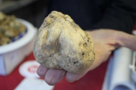 Food Marche festivals Acqualagna truffle festival