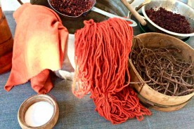 Robbia rubia tinctorum madder natural vegetal dye Urbino Marche Italy