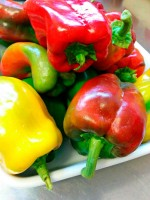 home grown peppers farm stay Agriturismo Urbino Marche Italy