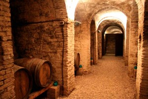Old Wine cellar visit wine tour Marche Italy