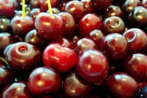 Wild sour cherries visciole wine visner visciolato preserves Marche holidays