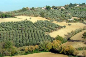 Cartoceto olive groves dop evo extra virgin olive oil festival