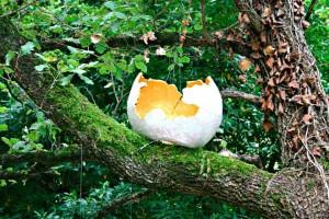 Contemporary art festival art in a wood Giovanna Giusto