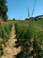 Organic kitchengarden organic farm holidays Urbino green eco