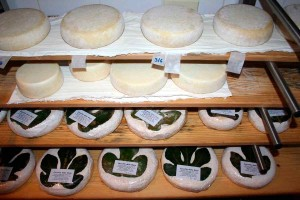 Cheese local producer farm to table foodie experience Marche Urbino